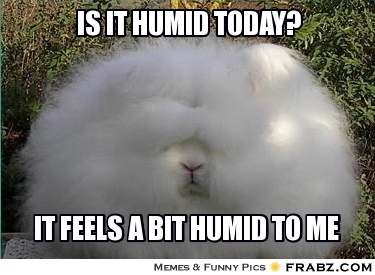 humid rabbit